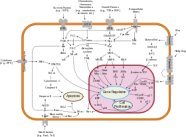 280px-signal_transduction_pathways-svg
