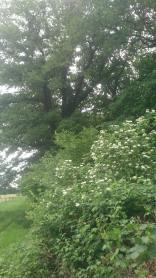 Woodland edge where all the flowering, fruiting shrubs thrive